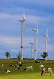 Wind power and organic grass fed cows 2. Wind power generators and organic grass fed cows grazing in the foreground on a farm in Germany Royalty Free Stock Image