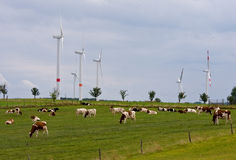 Wind power and organic grass fed cows. Wind power generators and organic grass fed cows grazing in the foreground on a farm in Germany Stock Photo