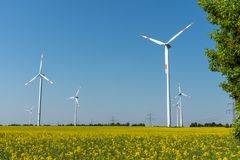 Free Wind Power Plants In A Field Of Blooming Oilseed Rape Royalty Free Stock Image - 119125826