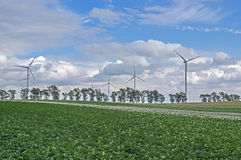 Wind power plants. The photo shows a group of wind turbines. They stand among cultivated fields. In the foreground you can see the potato crop. In the distance Royalty Free Stock Images