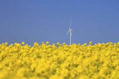 Wind  power and  Rapeseed Royalty Free Stock Photos