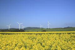 Wind  power and  Rapeseed Stock Photography