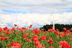 Wind power and red flowers Royalty Free Stock Photos