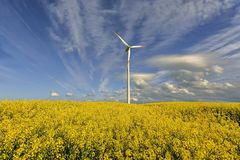 Wind power station in field with rape oil seed plants, Poland Royalty Free Stock Photos