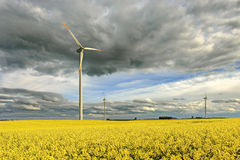 Wind power station in field with rape oil seed plants, Poland Stock Image