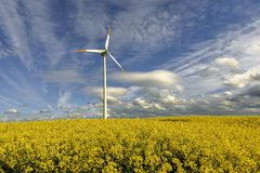 Wind power station in field with rape oil seed plants, Poland Royalty Free Stock Image