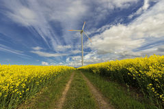 Wind power station in field with rape oil seed plants, Royalty Free Stock Photography