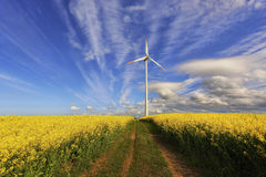 Wind power station in field with rape oil seed plants, Royalty Free Stock Image