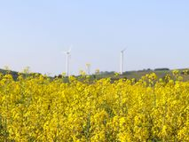 Wind power station in a raps fields. Rotating blades of energy generators. Ecologically clean electricity. Modern technologies for. The use of natural resources royalty free stock photos