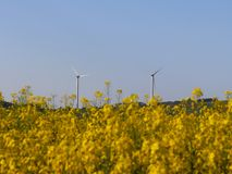 Wind power station in a raps fields. Rotating blades of energy generators. Ecologically clean electricity. Modern technologies for. The use of natural resources stock photo