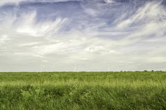 Wind Power Stations in Green Field Royalty Free Stock Images