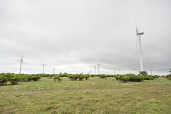 Wind Power Stations Spinning Royalty Free Stock Image