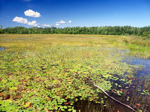 Wind Pudding Lake Northwoods Wisconsin. Emergent aquatic vegetation covers Wind Pudding Lake in northwoods Wisconsin royalty free stock images