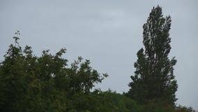 Wind rüttelt die Bäume stock video