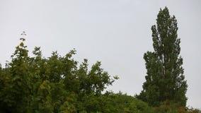Wind rüttelt Niederlassungen von Bäumen stock footage