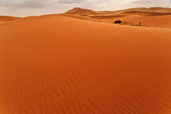 Wind rippled sand dune and oasis Sahara Morocco. Wind rippled expanse of sand dune with glimpse of oasis in Sahara Desert Morocco on cloudy day Royalty Free Stock Photos