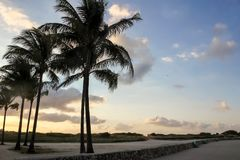 Wind and sand in palm trees on deserted waterfront boardwalk stock photography