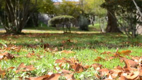 Wind-Schlagblätter auf Herbst stock video