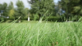 Wind shakes green grass in field against trees. At summer stock footage