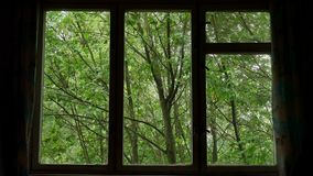 Wind shakes green leaves and trees tops in wooded area seen through window.  stock footage