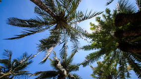 Wind shakes palm branches against blue sky sun disk. Wind shakes palm branches against blue sky with white sun disk behind palms stock video footage