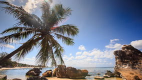 Wind Shakes Palm Branches Bent over Rocky Beach Against Sea Sky stock video