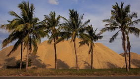 Wind shakes palm trees by road against building sand heaps stock video footage