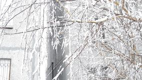Wind shakes tree branches in the yard near the house in winter.  stock video footage