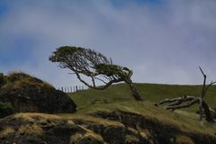 Wind shale tree royalty free stock images
