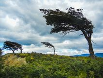 The wind shaped trees in ushuaia in tierra del fuego stock photos