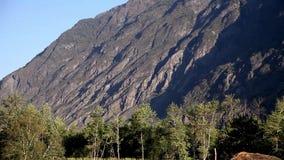 Wind slingerende bomen op de bergenvallei stock footage