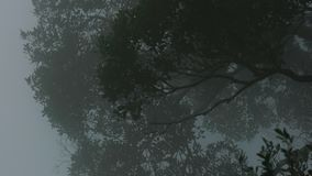 Wind slow blowing white mist in foggy day in tropical forest with dense green trees.  stock video footage