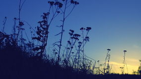 Wind stirs the grass meadow at sunset. stock video footage