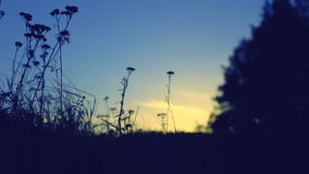 Wind stirs the grass meadow at sunset near the tree stock footage