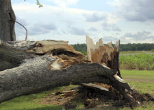 Wind Storm Damage Royalty Free Stock Photography