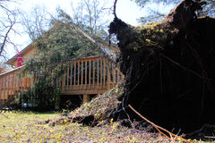 After the Wind Storm. A tree has toppled onto a house after a severe wind storm Stock Images