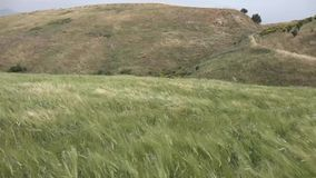 Wind strong spring in the hills with tall grass stock video