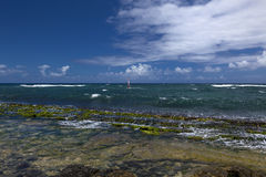 Free Wind Surfers Fill Bay At Hookipa Bay Royalty Free Stock Photos - 29368718