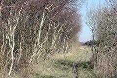 Wind-swept bomen langs een landweg Royalty-vrije Stock Afbeelding