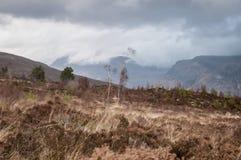 Wind swept Glen Torridon, Slioch in the distance Royalty Free Stock Images