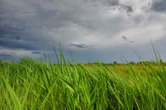 Wind swept grass and stormy sky Royalty Free Stock Images