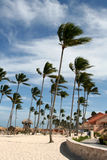 Wind Swept Palm Tree Resort. Wind swept palm trees on a tropical resort Royalty Free Stock Photos