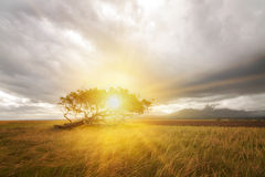 Sunny lone tree Royalty Free Stock Photos