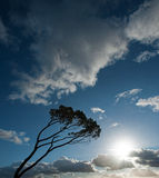 Wind swept tree Stock Photo