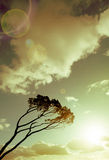 Wind swept tree Royalty Free Stock Image