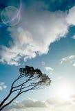 Wind swept tree Stock Images