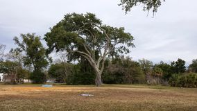 Wind swept tree. In Mississippi on a cloudy day.  One of the beautiful sights to see In the south Stock Photos