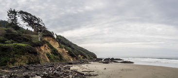 Wind swept trees at rugged ocean beach Stock Photography