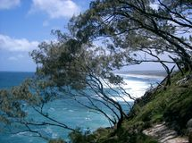 Wind swept trees, Stradbroke Island Stock Photo