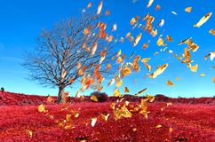 Wind tee falling leaves on air , autumn weather background. Nature royalty free stock photos
